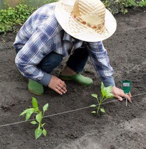 Tester gleby – czy warto używać go w swoim ogrodzie?