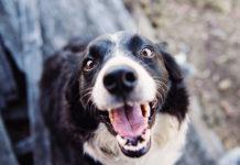 Czy sucha karma to odpowiedni wybór dla psa?