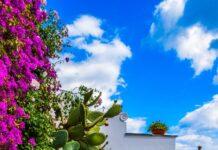 Jak stworzyć własny ogród wertykalny